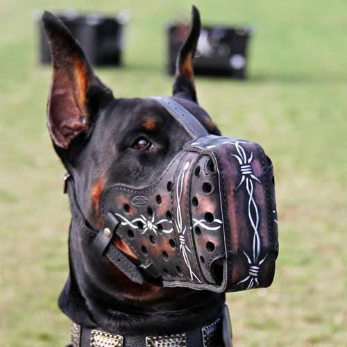 بالصور اشرس انواع الكلاب , كلاب لا تمتلك الرحمه 521 3