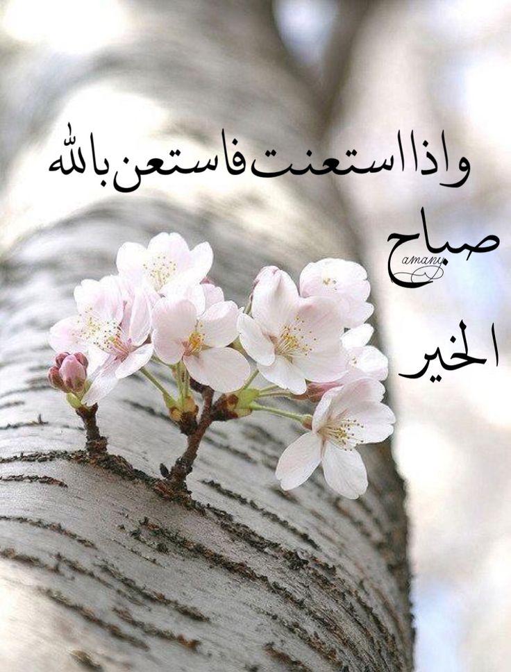 بالصور اجمل صباح الخير , كلمات صباح الخير 5693 10