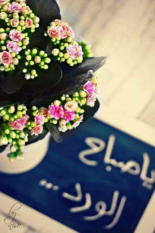 بالصور اجمل صباح الخير , كلمات صباح الخير 5693 2