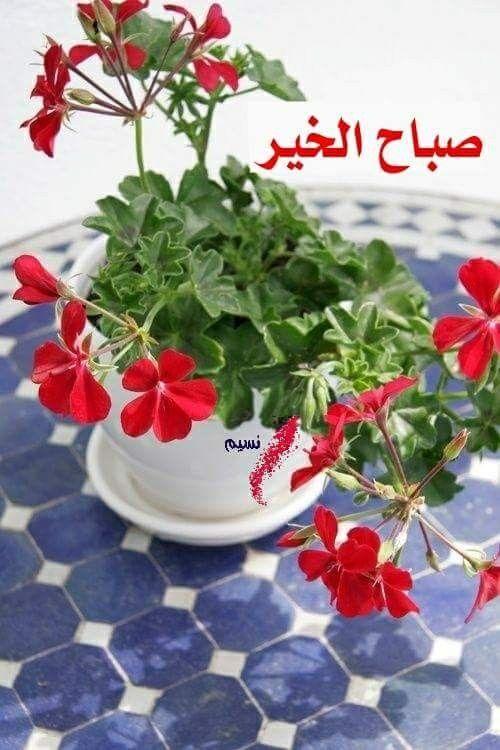 بالصور اجمل صباح الخير , كلمات صباح الخير 5693 3