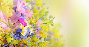 صوره صور ورد خلفيات , خلفيات ورود و زهور