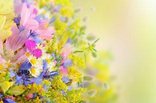 صور صور ورد خلفيات , خلفيات ورود و زهور