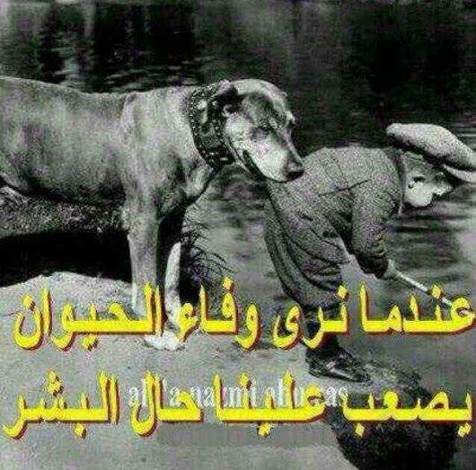صورة صور عن خيانة الصديق , اقوي صور معبرة عن الصديق الخائن