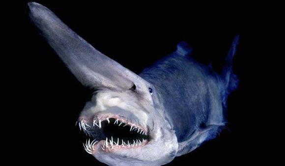 بالصور صور سمك القرش , معلومات وصور عن سمكة القرش 2438 6