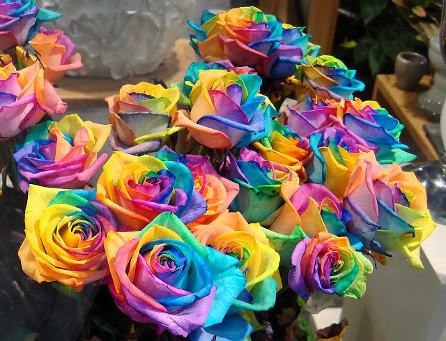 بالصور اجمل وردة في العالم , تعرف علي اجمل وردة علي سطح الارض 2596 9