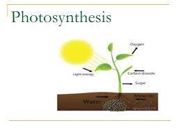 صورة عملية البناء الضوئي , النبات يتنفس بحرية