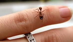 بالصور كيفية التخلص من النمل في المنزل , معالجه حشرات المنزل 12348 8