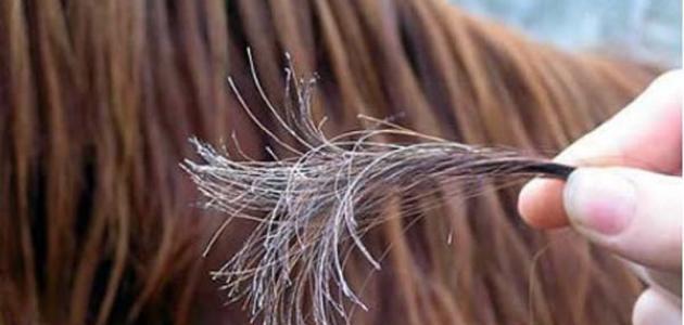 صور خلطات لعلاج تقصف الشعر , اعيدي لشعرك الحياة