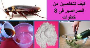 صور كيفية التخلص من الصراصير في الثلاجة , طرق التخلص من الصراصير في الثلاجة