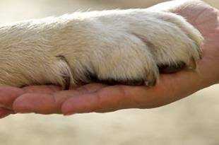 صورة افضل انواع الكلاب وفاء , تعرف على افضل انواع الكلاب