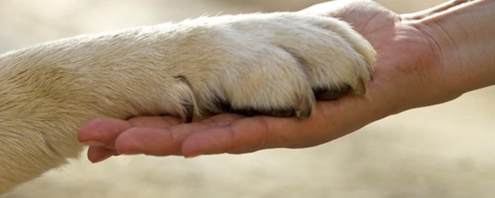 صور افضل انواع الكلاب وفاء , تعرف على افضل انواع الكلاب