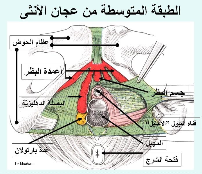 صورة اسباب خروج الهواء من المهبل , ما هي اسباب خروج الهواء من المهبل
