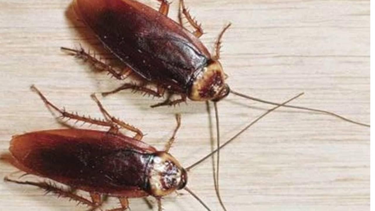 صور الصراصير في المنام , رؤية الحشرات في الحلم