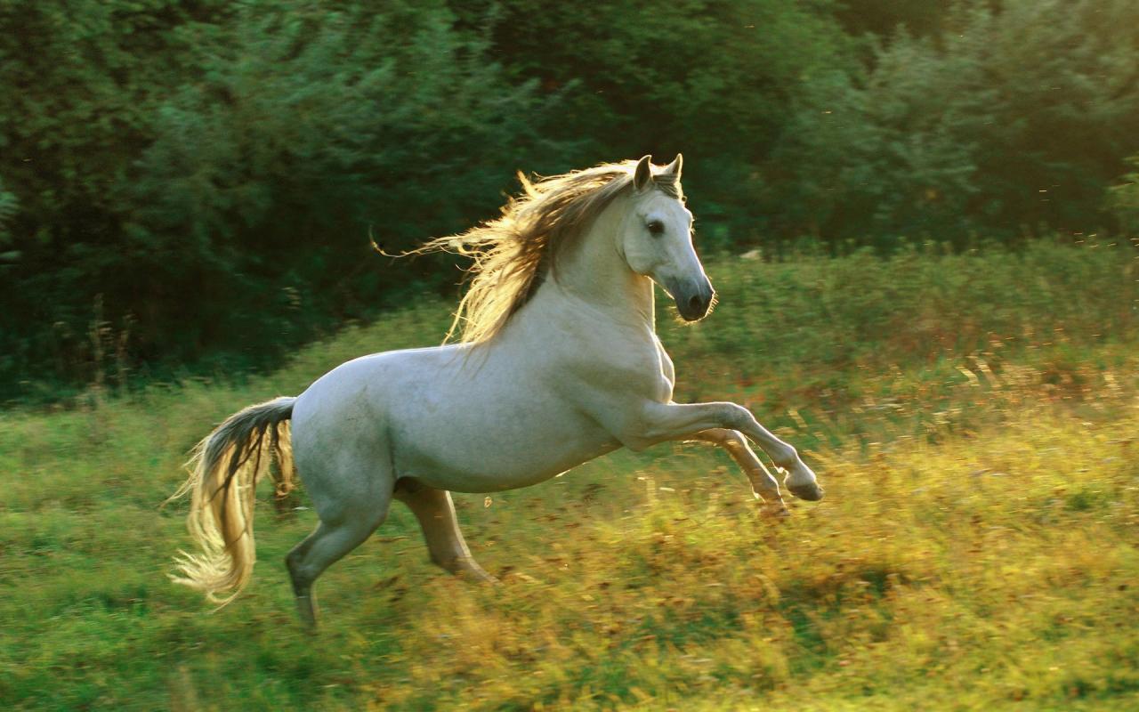 صور صور خيول جميلة , اجمل صور للخيول الاصيلة