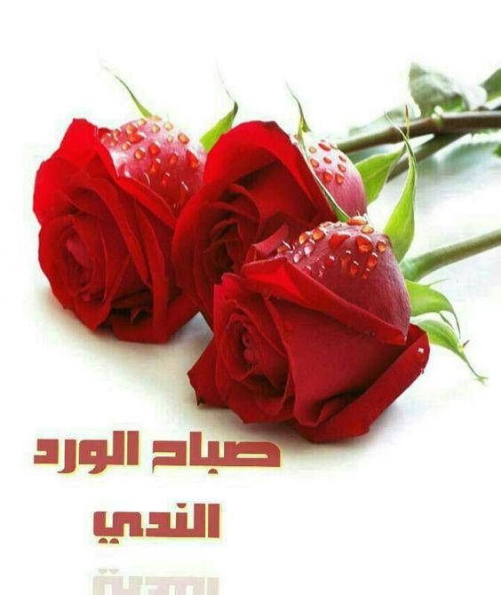 صورة صباح الخير زهور , صور ورود جميلة مكتوب عليها صباح الخير 11726 3