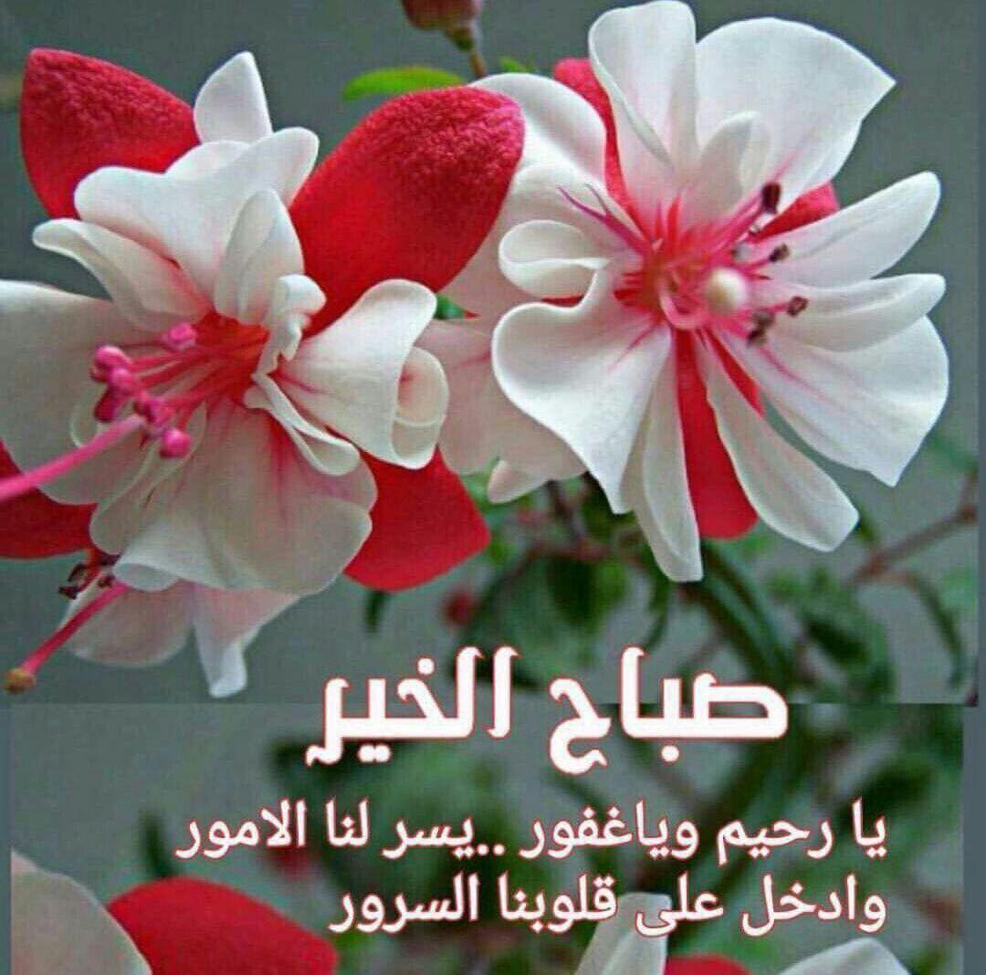 صورة صباح الخير زهور , صور ورود جميلة مكتوب عليها صباح الخير 11726 4