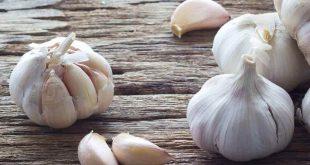صور فوائد الثوم للشعر والصلع , ماهى الفوائد الهامه للتوم في انبات الشعر