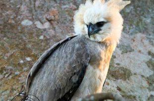 صورة اكبر الطيور حجما , اكبر الطيور علي الاطلاق
