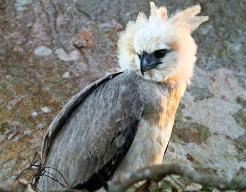 صور اكبر الطيور حجما , اكبر الطيور علي الاطلاق