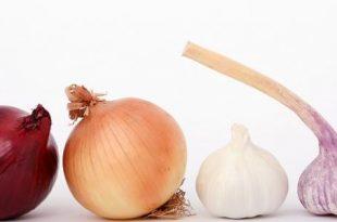 صور فوائد الثوم والبصل , الثوم والبصل اكل مفيد