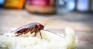 صور شركة مكافحة الصراصير , التخلص من الحشرات نهائيا