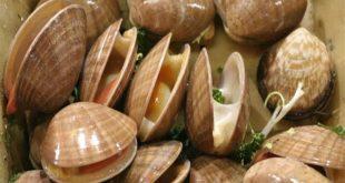 صورة صور بلح البحر , احدث الصورة البحرية