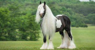 صورة اجمل حصان في العالم, أجمل الأحصنة في العالم