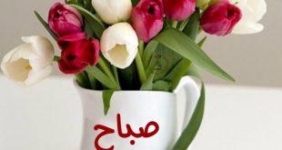 صورة صباح الورد و النور , احلى صور صباح الخير